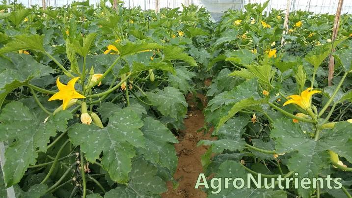 Regular crecimiento y aumentar producción con Agro Xifer