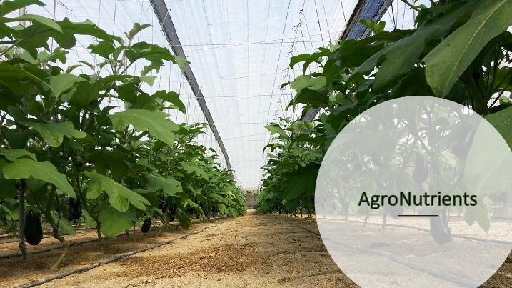 Agro Kuat al inicio y Agro Xifer para mantener cuajado y engorde