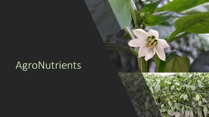 Agro Kuat frena el crecimiento inicial y fuerza el cuajado